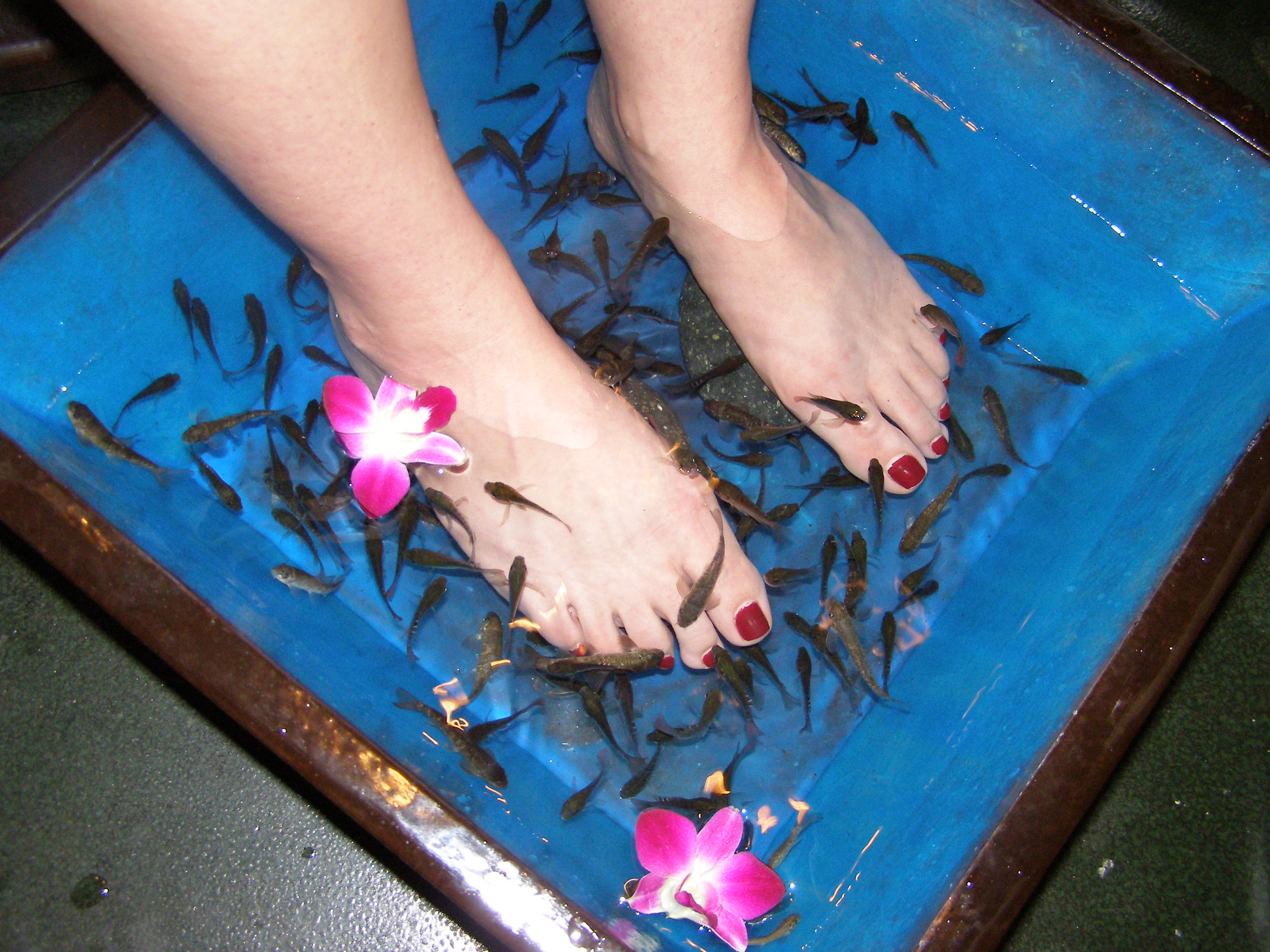 Health and beauty simplystudded page 6 for Fish eating dead skin spa